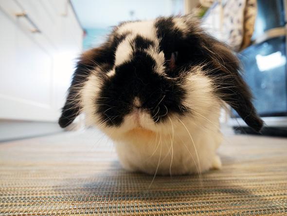 flopsy on rug (1)